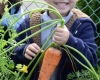 young boy holding carrot