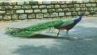 turtle backzoo