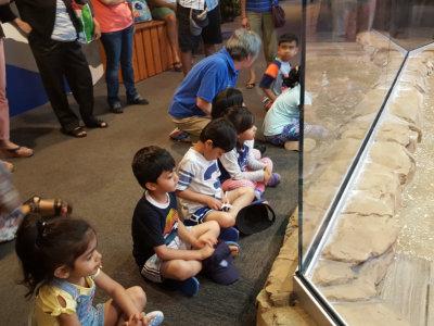 jenkinsons aquarium