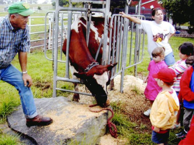kids watching the cow